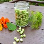 Tausendsassa Kapuzinerkresse – Arzneipflanze des Jahres 2013