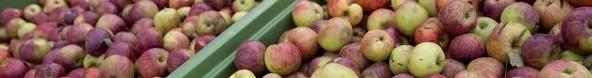 Bild Pressekonferenz zur Eröffnung der Apfelsaft-Saison
